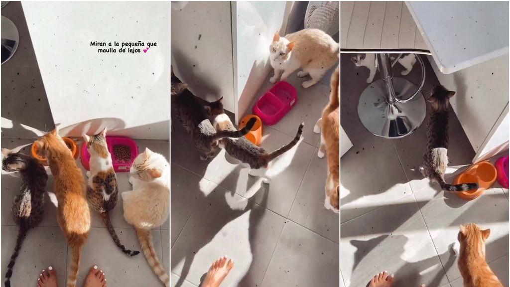 sfia-gatos