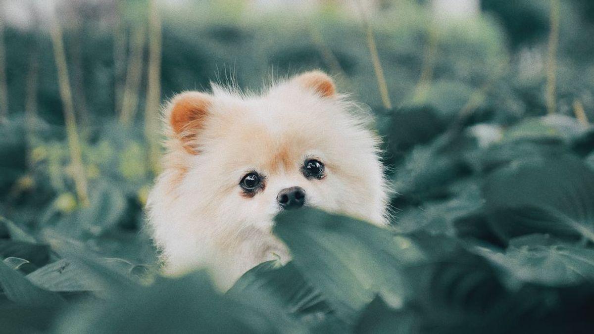 Paciencia y poco agua: claves para bañar a un cachorro por primera vez