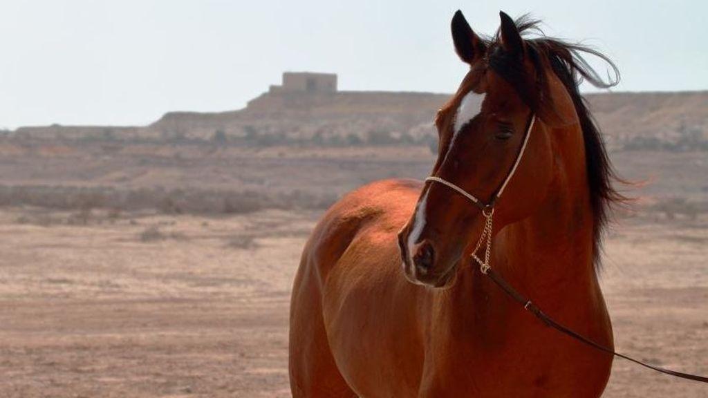 Una imagen de archivo de un caballo
