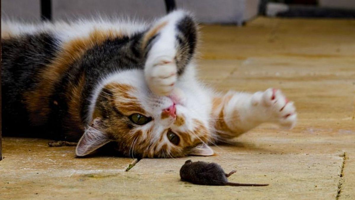 Los gatos y la caza: un estudio distingue cinco tipos de dueños según su reacción a este instinto