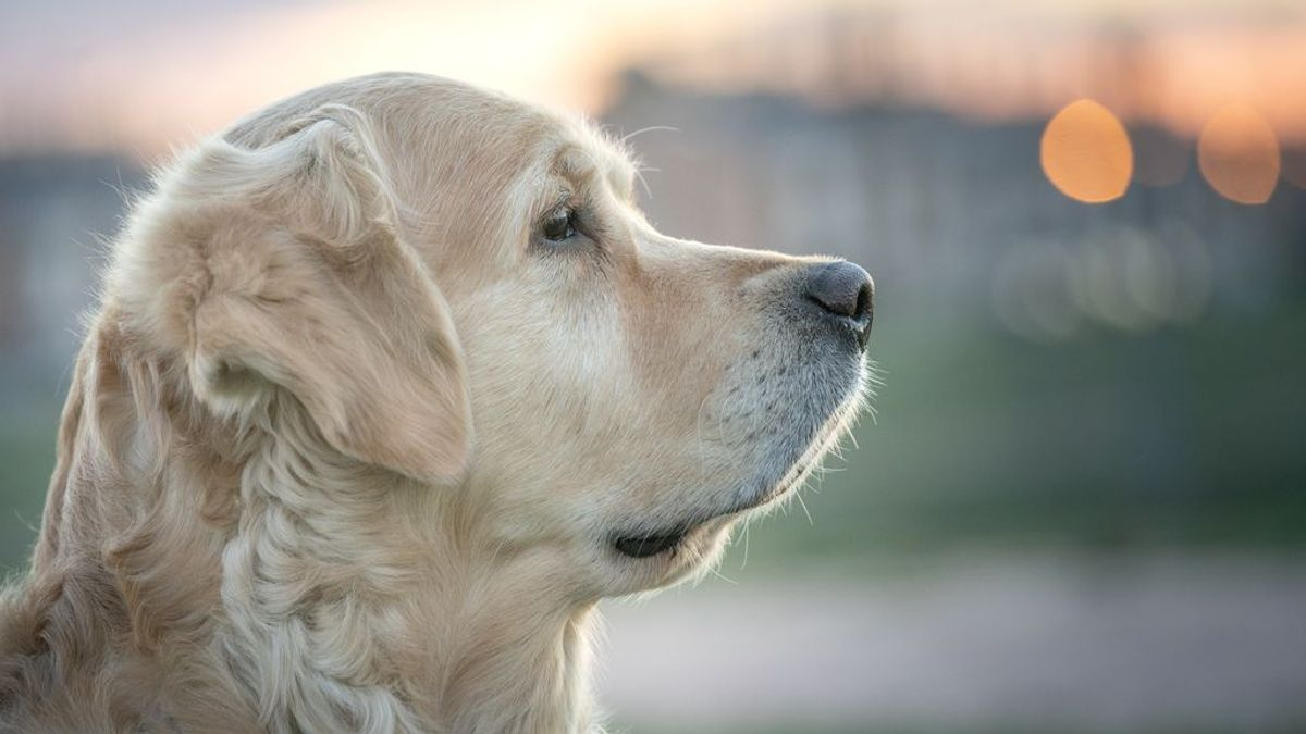 Perro con pelazo, pelo sano: estos alimentos devolverán el brillo a su melena