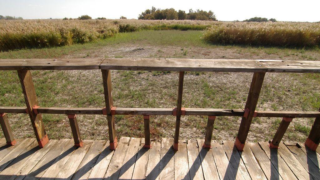 Adiós al humedal del Daimiel: la sequía 'crónica' que lo está secando del todo