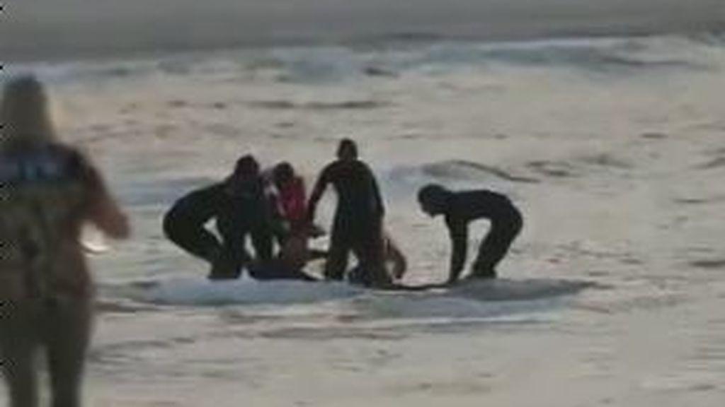 Muere un surfista tras el ataque de un tiburón