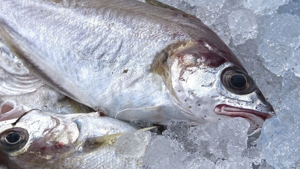 Claves para comprar pescado fresco: el color de la agalla y otros consejos