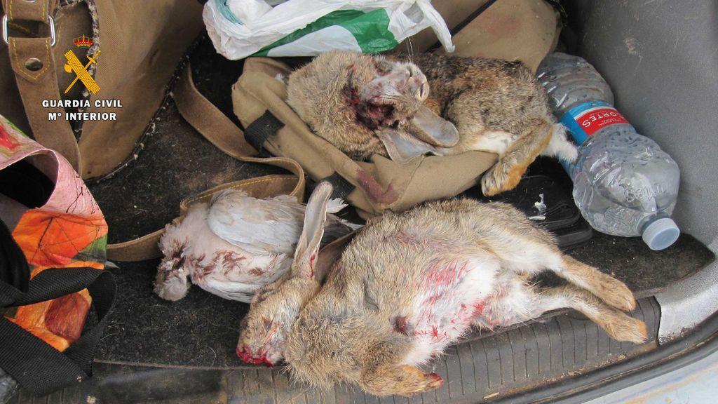 Interceptado en Calahorra un conductor drogado, armado y con animales vivos y muertos en el maletero