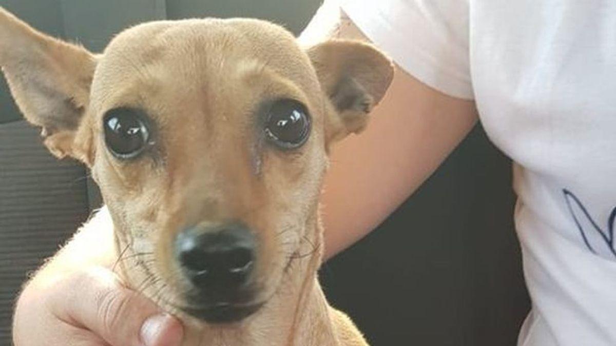 Maltrato animal en Sevilla: graban a una mujer lanzando contra el suelo a su perro por hacerse pis en casa