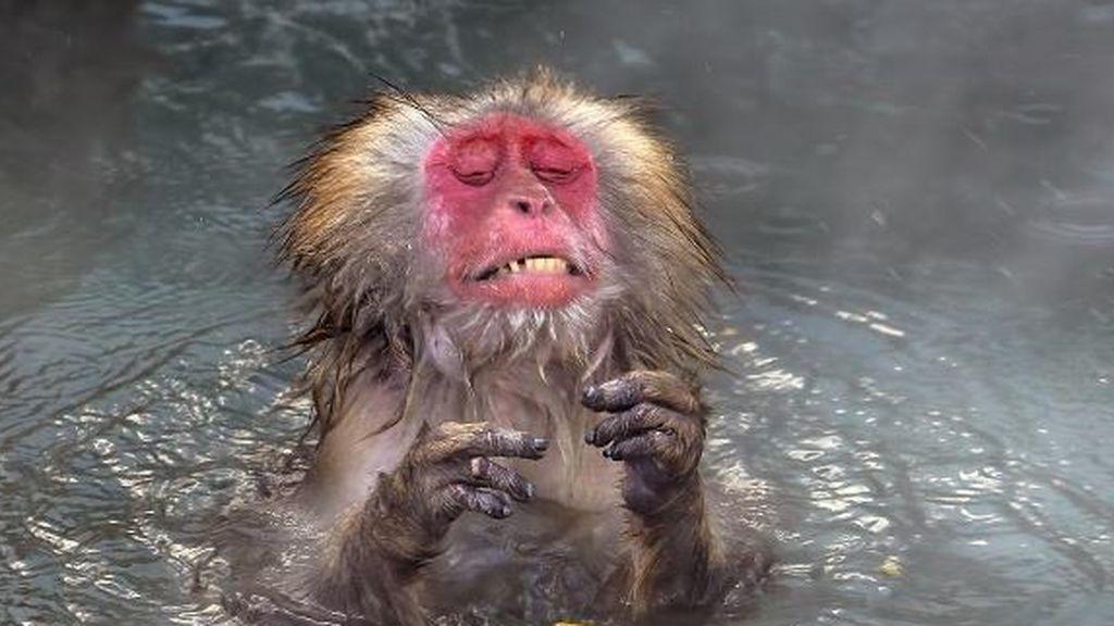 Un mono aterido de frío o la 'peineta' de una tortuga: las muestras de los finalistas de los Comedy Wildlife 2020