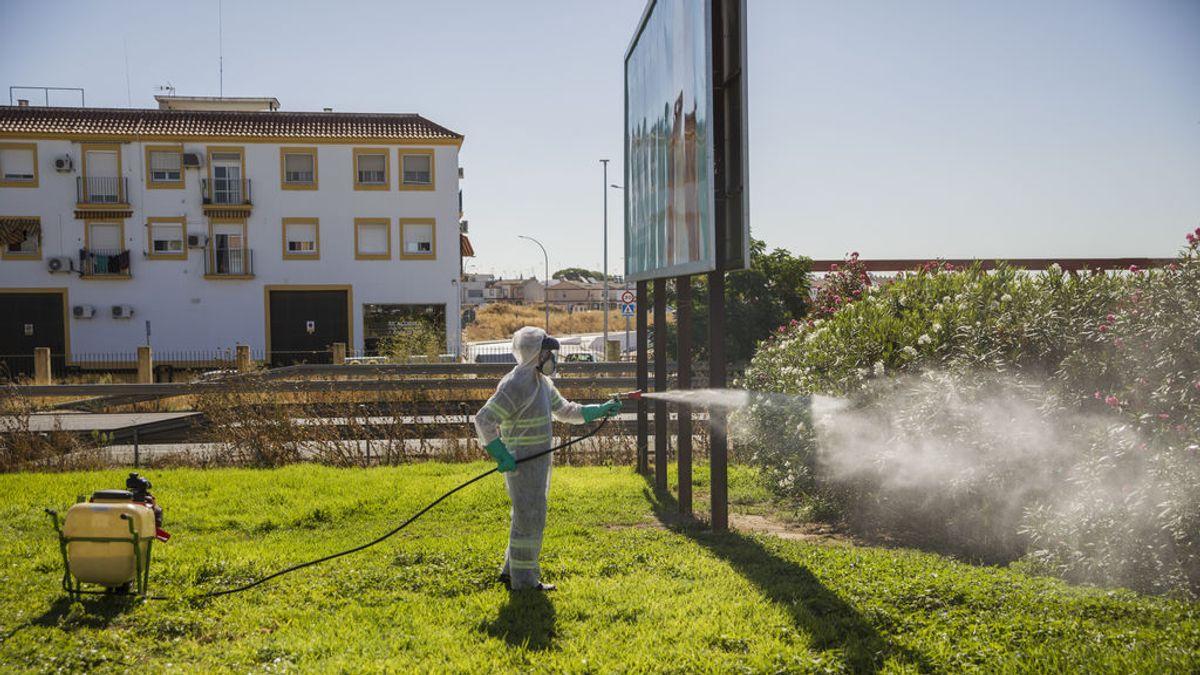 Los casos de virus del Nilo en Sevilla permanecen en 24, siete de ellos hospitalizados