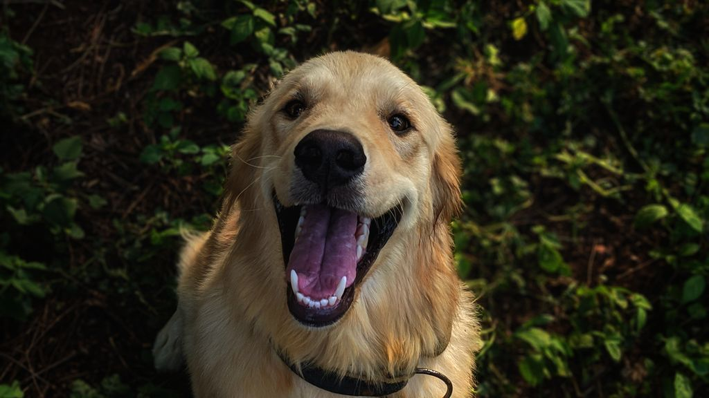 El cepillado es fundamental: claves para acabar con el sarro en los dientes de tu perro
