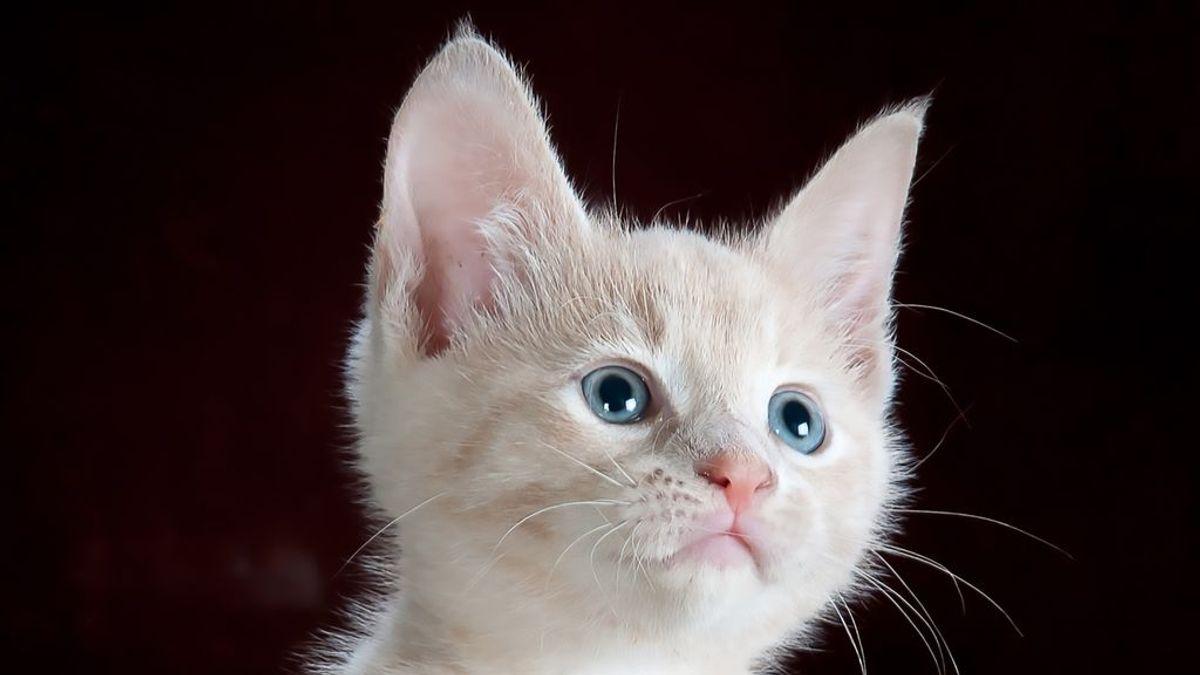 Paciencia y mucha ternura: darle el biberón a un gato es más fácil de lo que parece