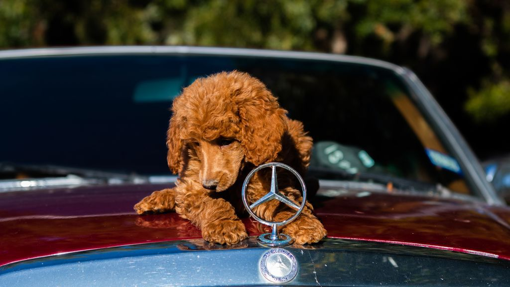 """""""Mi perro babea en el coche"""": motivos y soluciones para este problema de salud"""