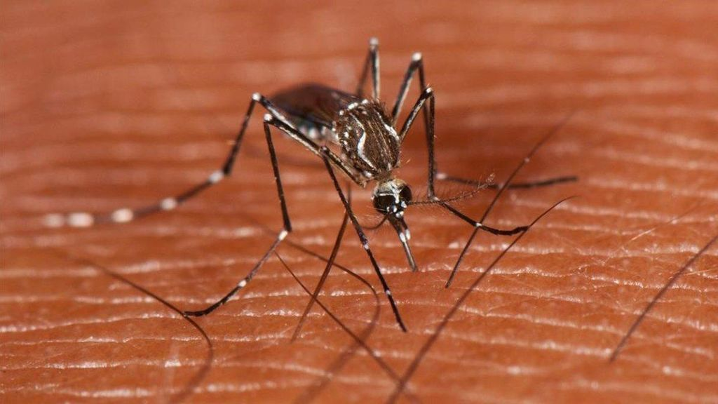 El virus del Nilo se cobra la primera muerte en Cádiz: la quinta en Andalucía
