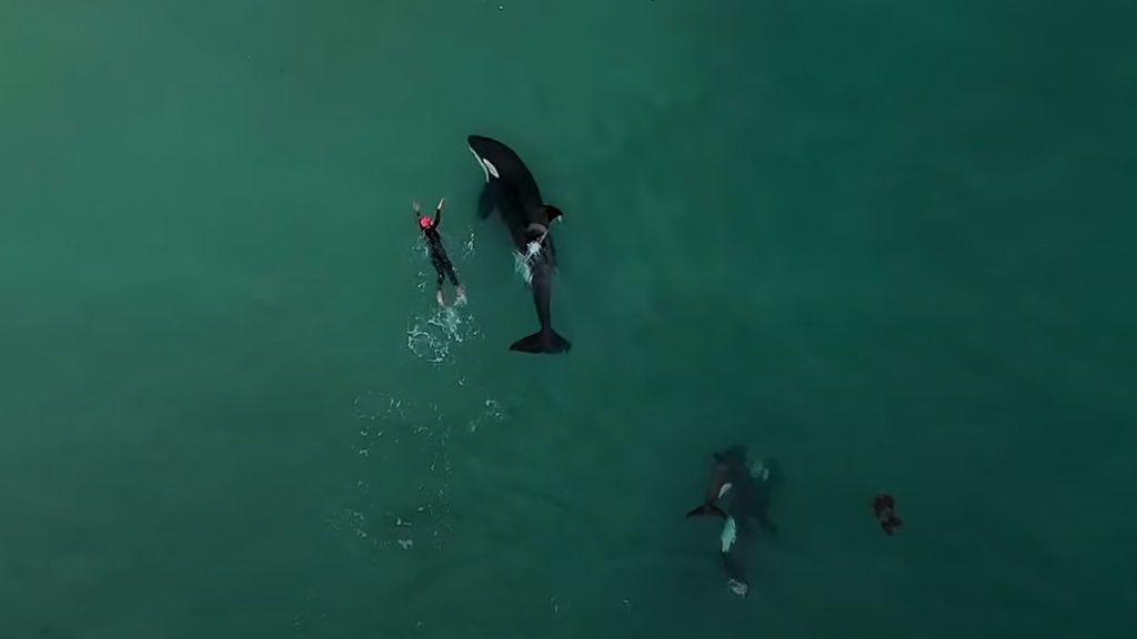 Judie Johnson, la mujer de 60 años que nadó en mar abierto con orcas asesinas