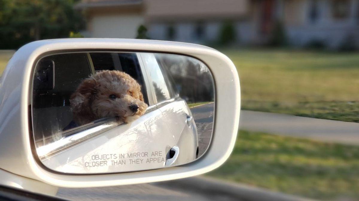 Tan habitual en perros como en personas: evitar los mareos de tu mascota en el coche es sencillo