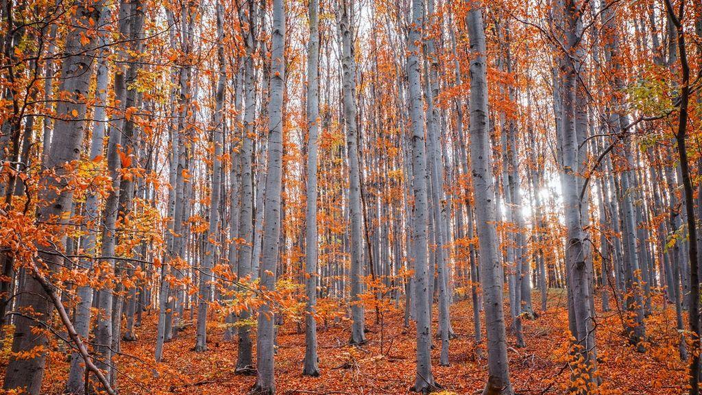 El bosque de Muniellos, el hayedo de Tejera Negra y otros lugares idílicos para disfrutar del otoño en España