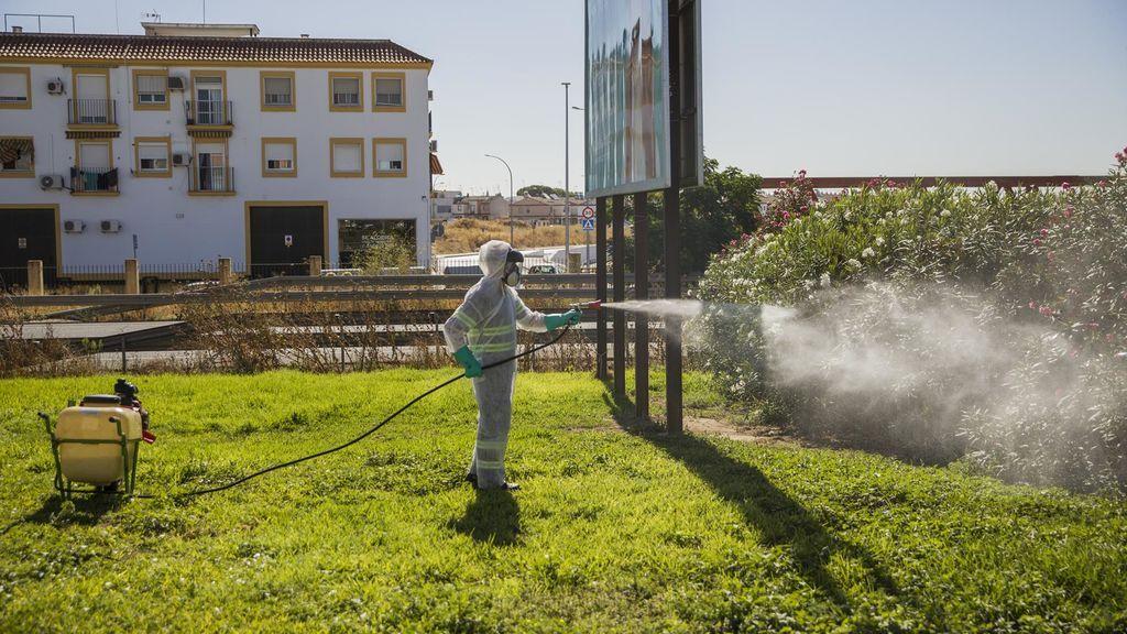 Un vecino de Vejer, segunda muerte en  Cádiz por el virus del Nilo y la sexta en Andalucía