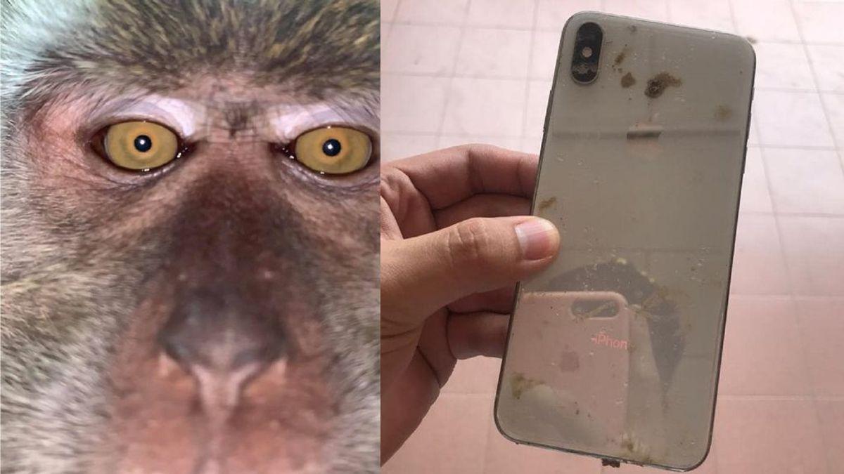 Un joven pierde el móvil y lo encuentra al día siguiente con selfis y vídeos grabados por un mono