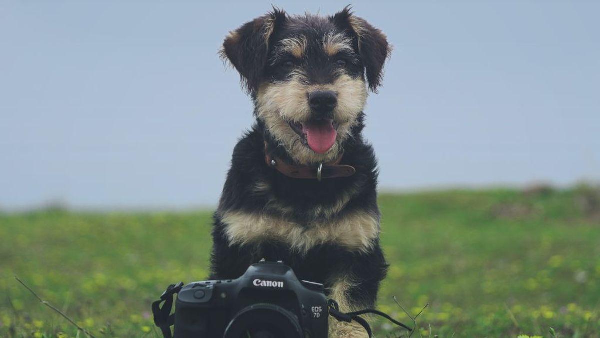 Perros influencers: una tarea difícil pero no imposible