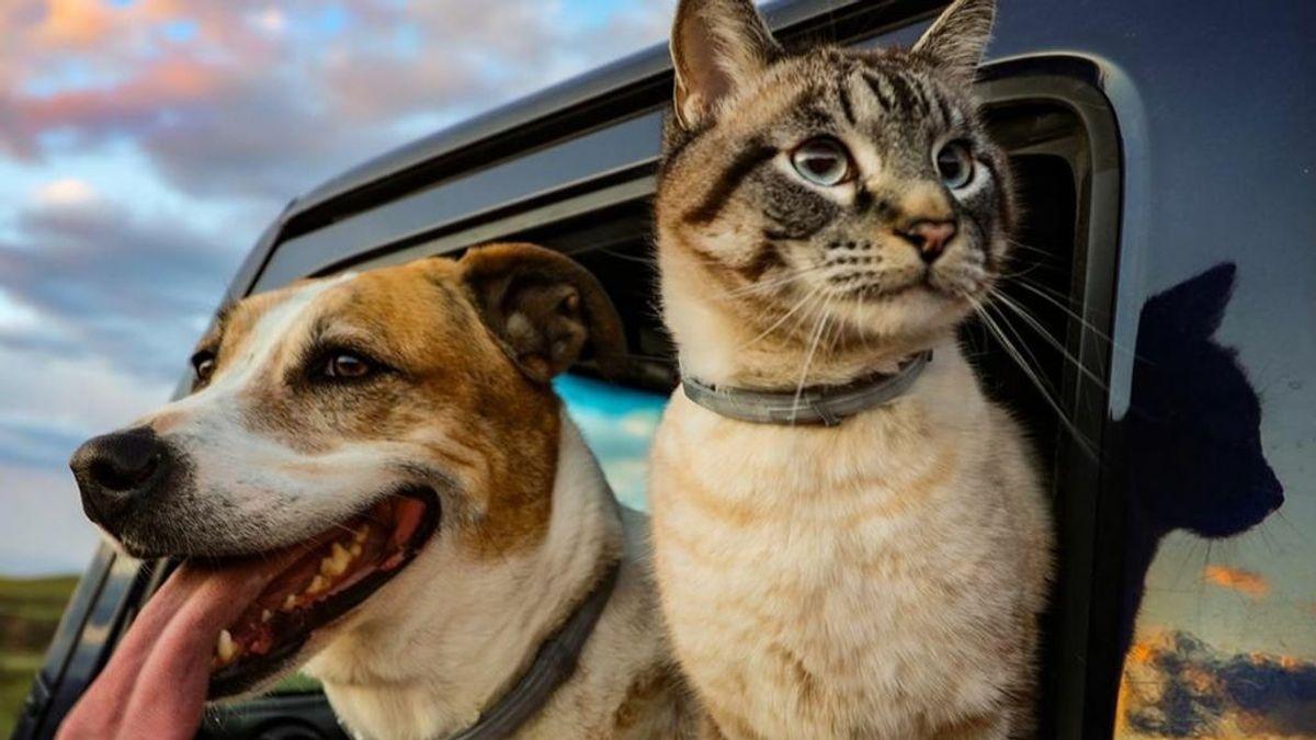 Un estudio desvela que perros y gatos pueden tener coronavirus y contagiar a humanos