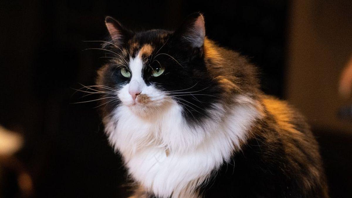 Gato agresivo: motivos por los que tu minino discute contigo y con otros gatitos