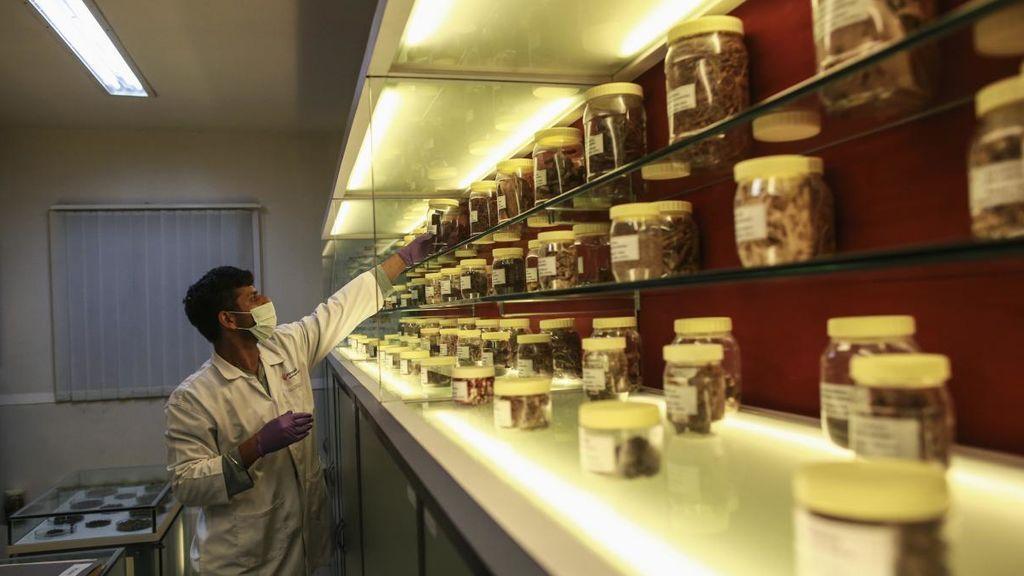 La OMS autoriza probar la eficacia de las hierbas medicinales contra el coronavirus