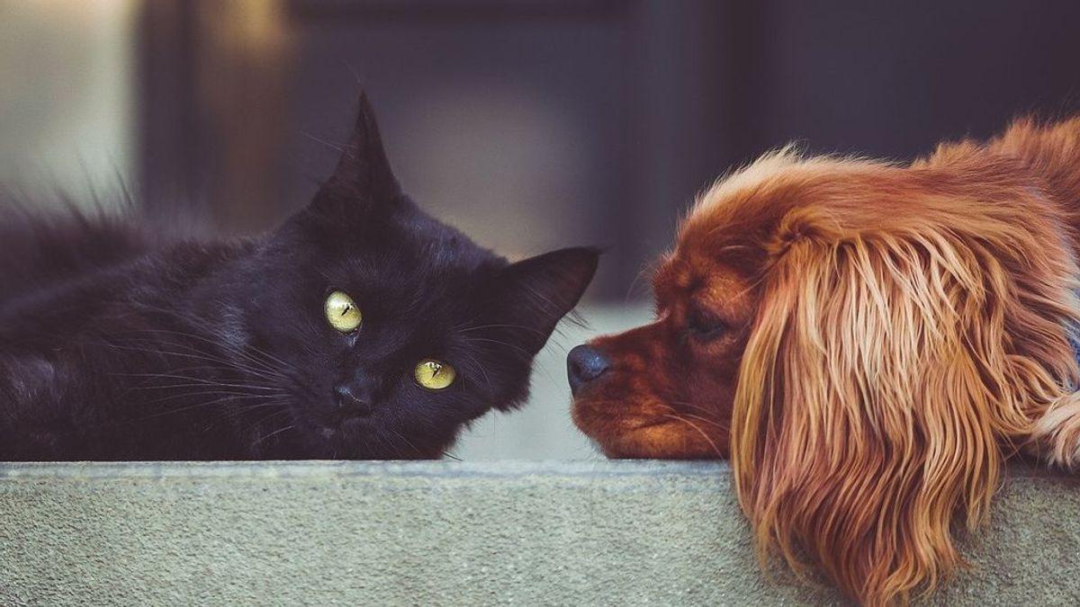 El gato Negrito no murió por coronavirus: todo lo que se sabe de mascotas y contagios