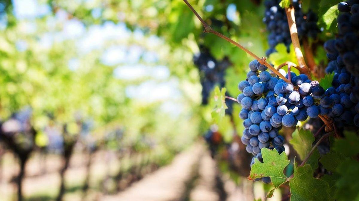 El clima, la lluvia o la luz: los elementos naturales que impactan en la calidad del vino