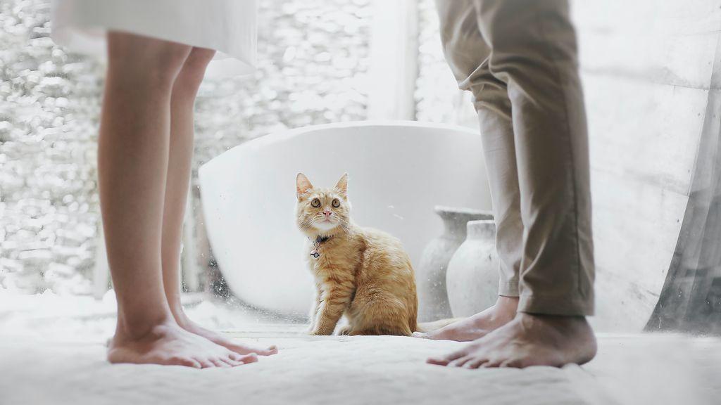 Un juez aprueba la custodia compartida para cuidar de un gato: las mascotas también sufren el fin de las relaciones