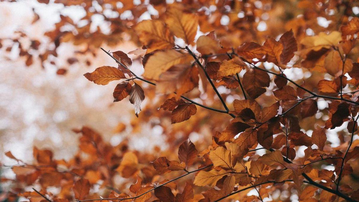 El otoño que nos espera: ¿Habrá veranillo de San Miguel?