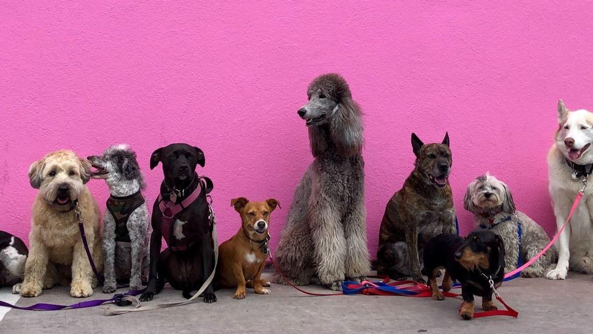 También hay distinciones entre 'el mejor amigo del hombre': las diez razas de perro más populares