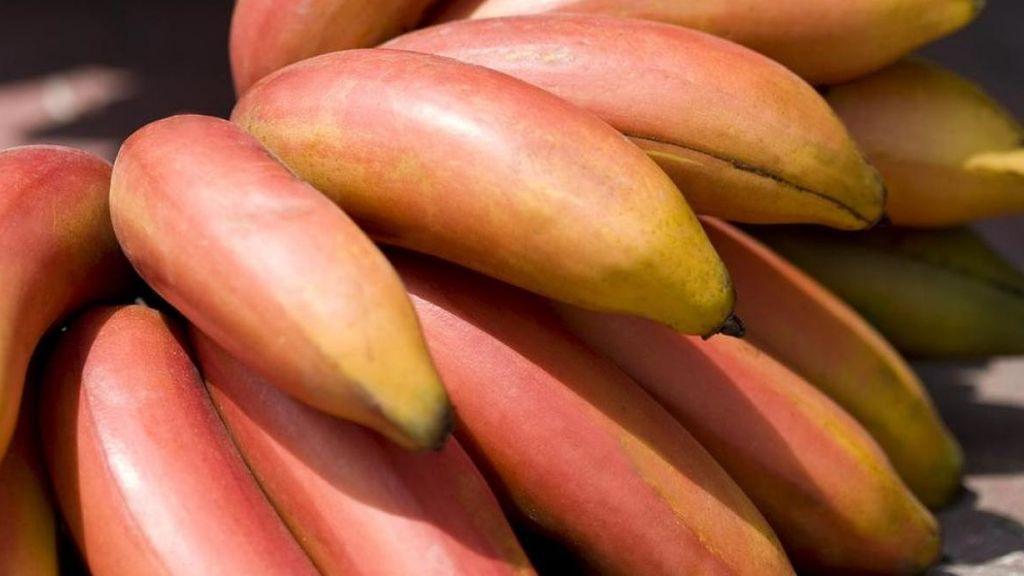Llega el plátano rojo con sabor a frambuesa