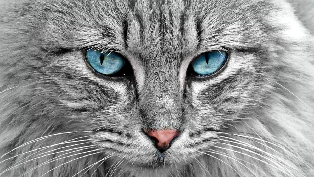El gato con gotas: aprendiendo de los veterinarios en la lucha contra la covid-19