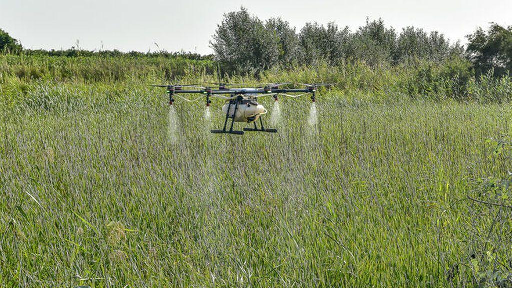 Así actúan los drones  que fumigan los mosquitos que transmiten el virus del Nilo