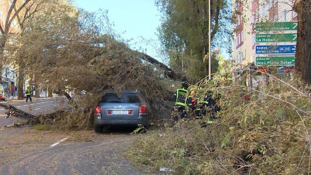 Un árbol cae sobre un coche en marcha y el conductor salva la vida al quedar atrapado entre dos ramas