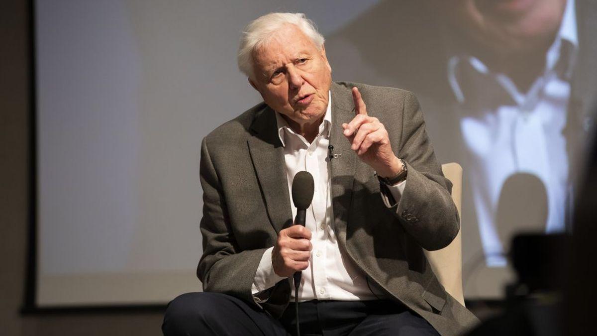 Tres millones de seguidores en dos días: la llegada de David Attenborough a Instagram con 94 años