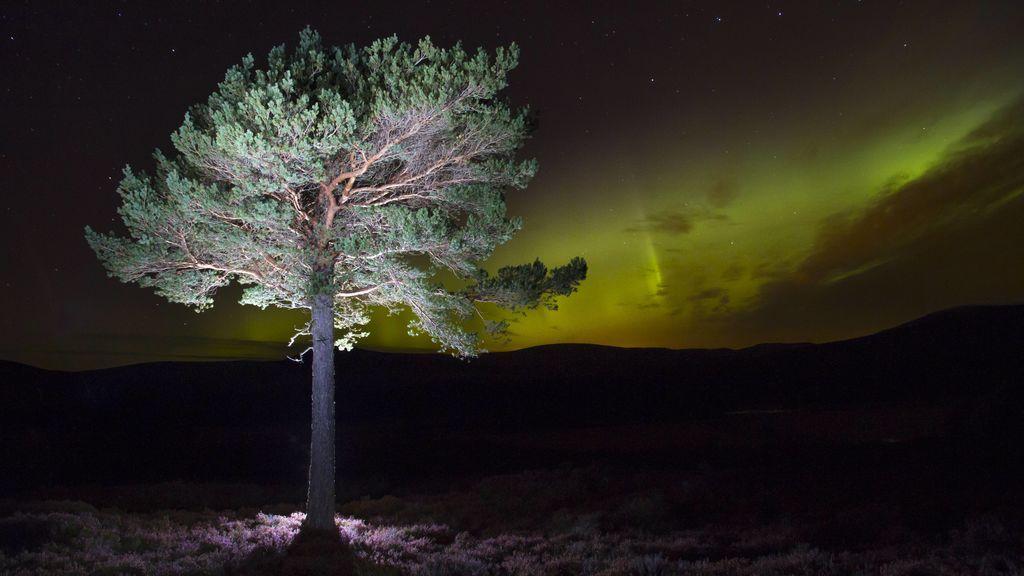 Auroras boreales en Europa: pronostican que serán visibles en varios países