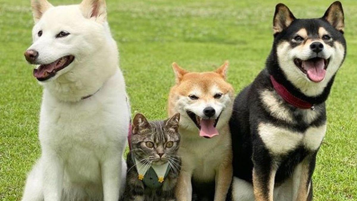 Los 4 animales