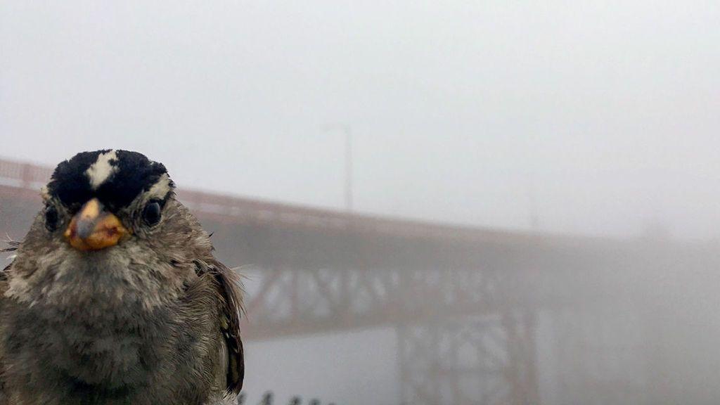 Un estudio afirma que los pájaros han mejorado su canto tras el confinamiento por la covid-19