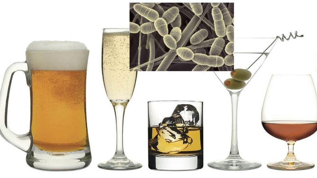 varios tipos de bebidas alcohólicas.