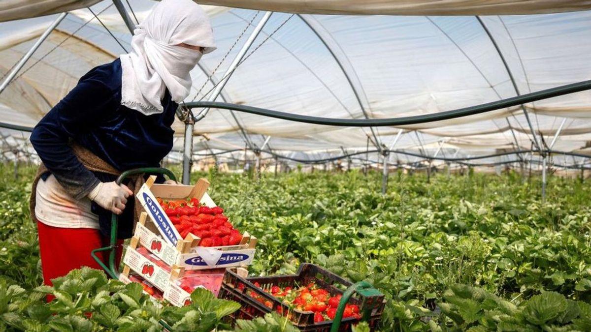 Los inmigrantes que trabajaron en el campo durante la pandemia tendrán autorización de residencia y trabajo 2 años
