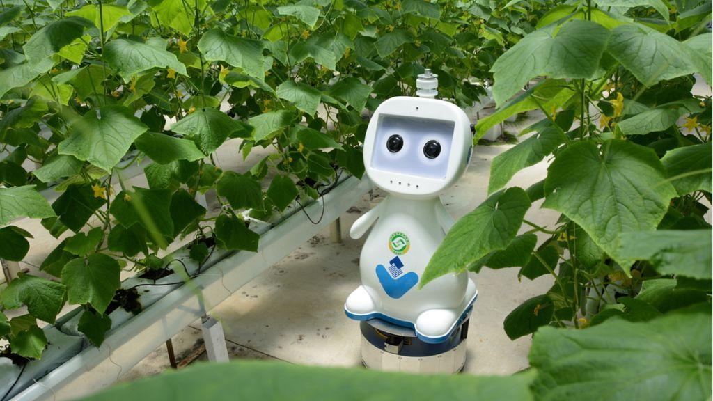 Robot agricultor en China: la agricultura y ganadería que viene con el 5G