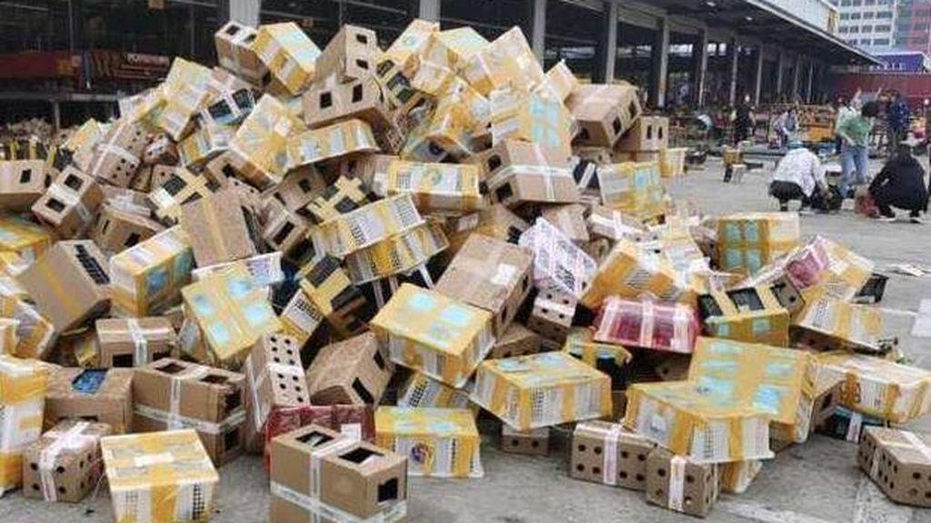 Siniestro descubrimiento en China, hallan 5.000 mascotas muertas en cajas en un depósito