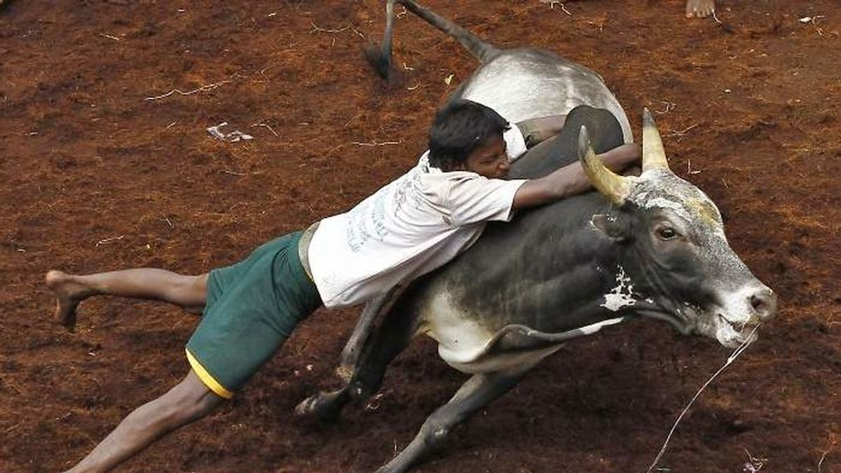 Un menor salva a su abuela del ataque de un toro: plantó cara al animal