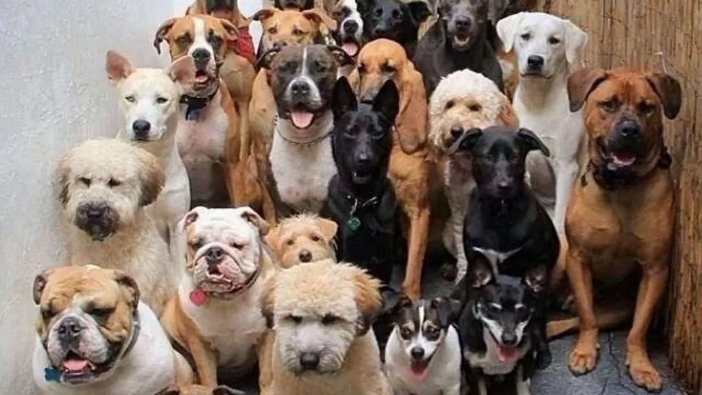 Dogs for Joe
