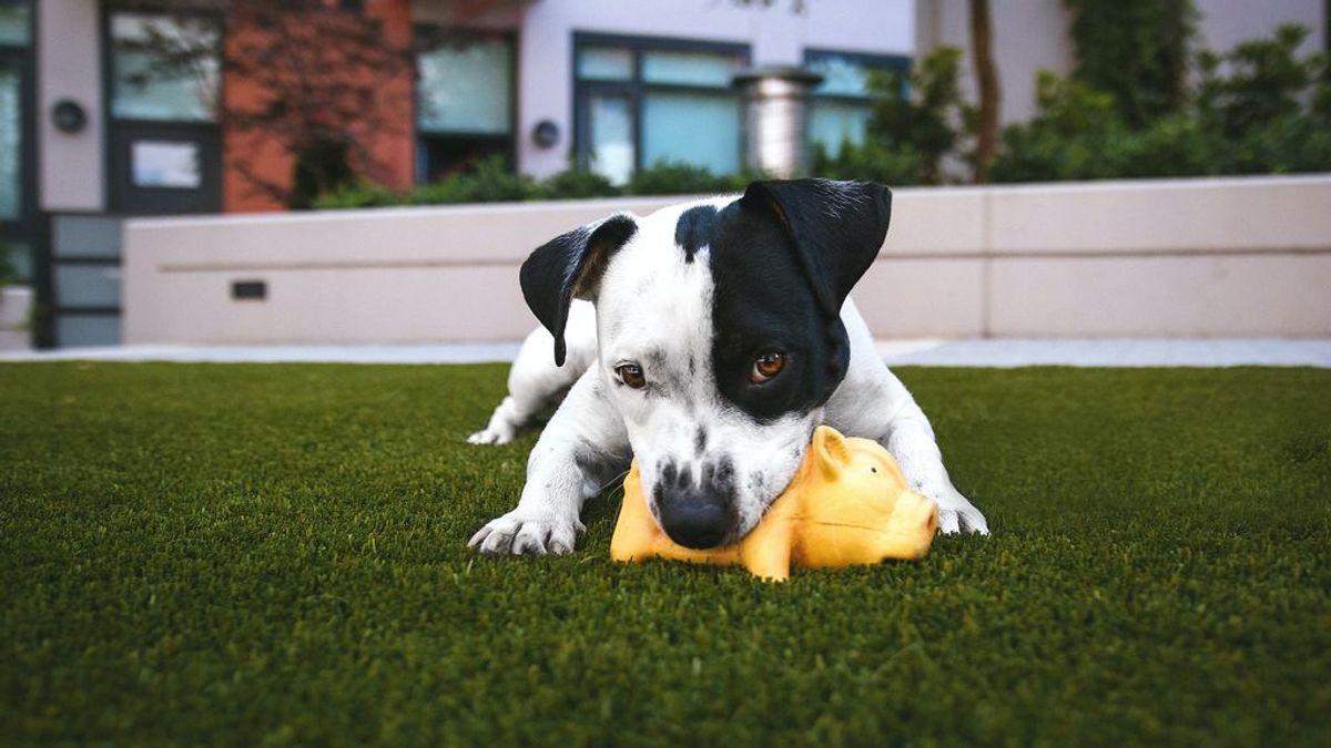 La importancia de los tres primeros meses: jugar con tu cachorro es fundamental para su desarrollo