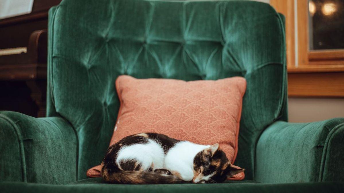 Hogar seguro, gato sano: cosas que todos tenemos por casa y son peligrosas para los mininos