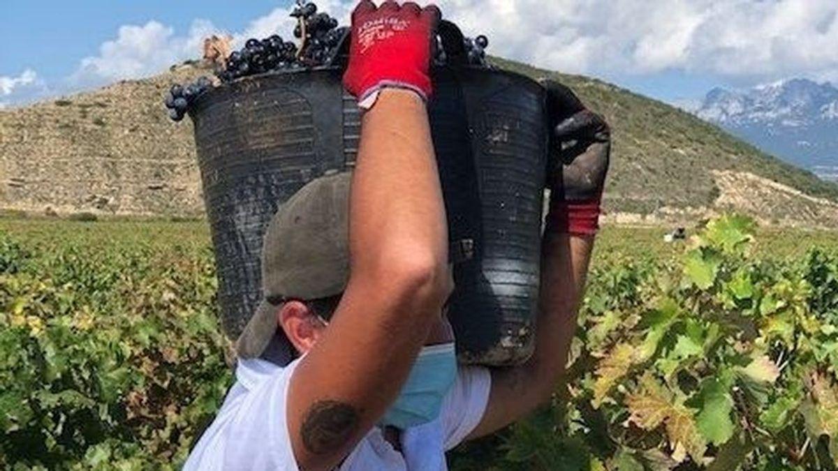 Surge un brote de Covid-19 en Jaén por temporeros recién llegados de la vendimia francesa
