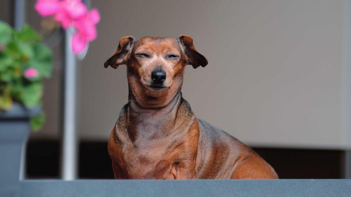 Identificar la rabia canina, una cuestión de vida o muerte: los síntomas más habituales