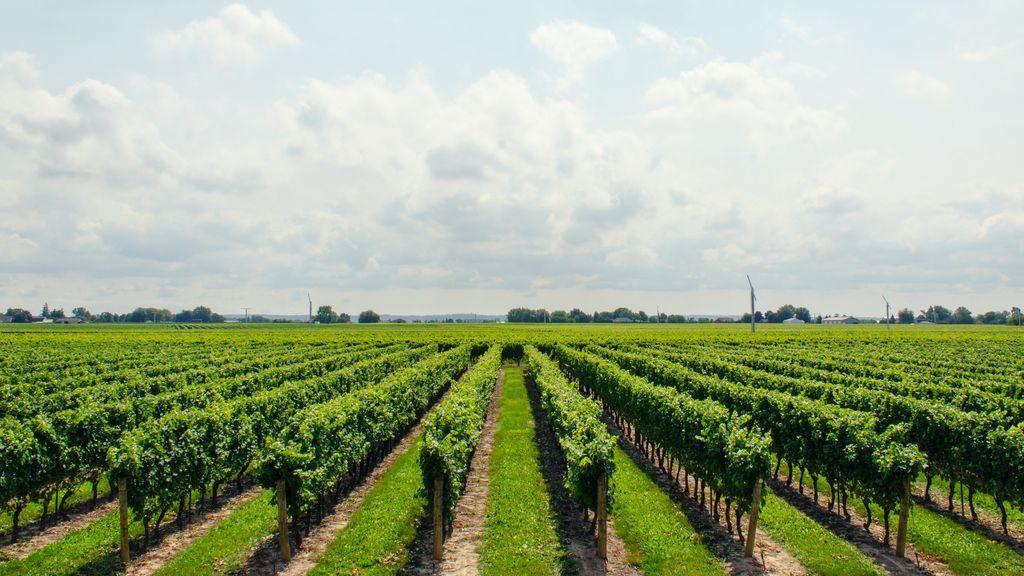 Rutas del vino, 5 ciudades españolas donde podrás sentirte como un sumiller.
