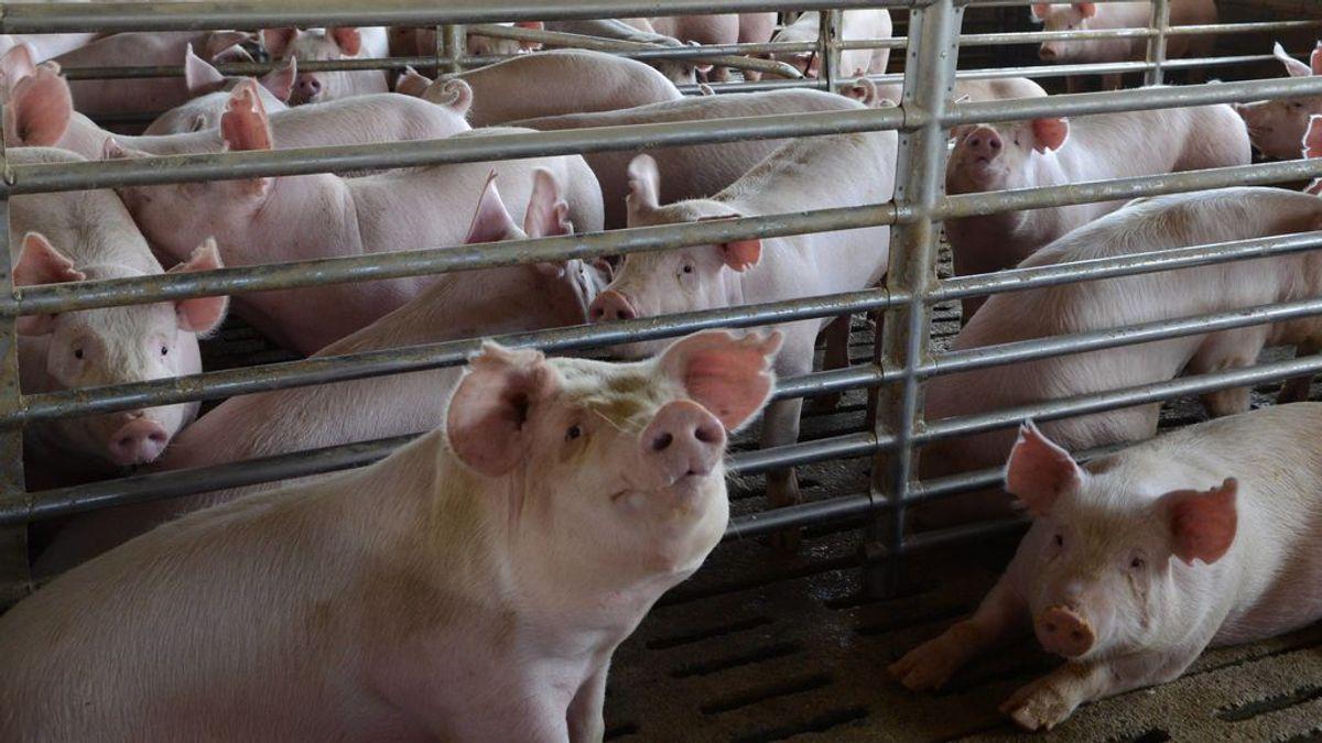 """El Ministerio de Consumo quiere videovigilar mataderos """"por el bienestar animal y la seguridad alimentaria"""""""